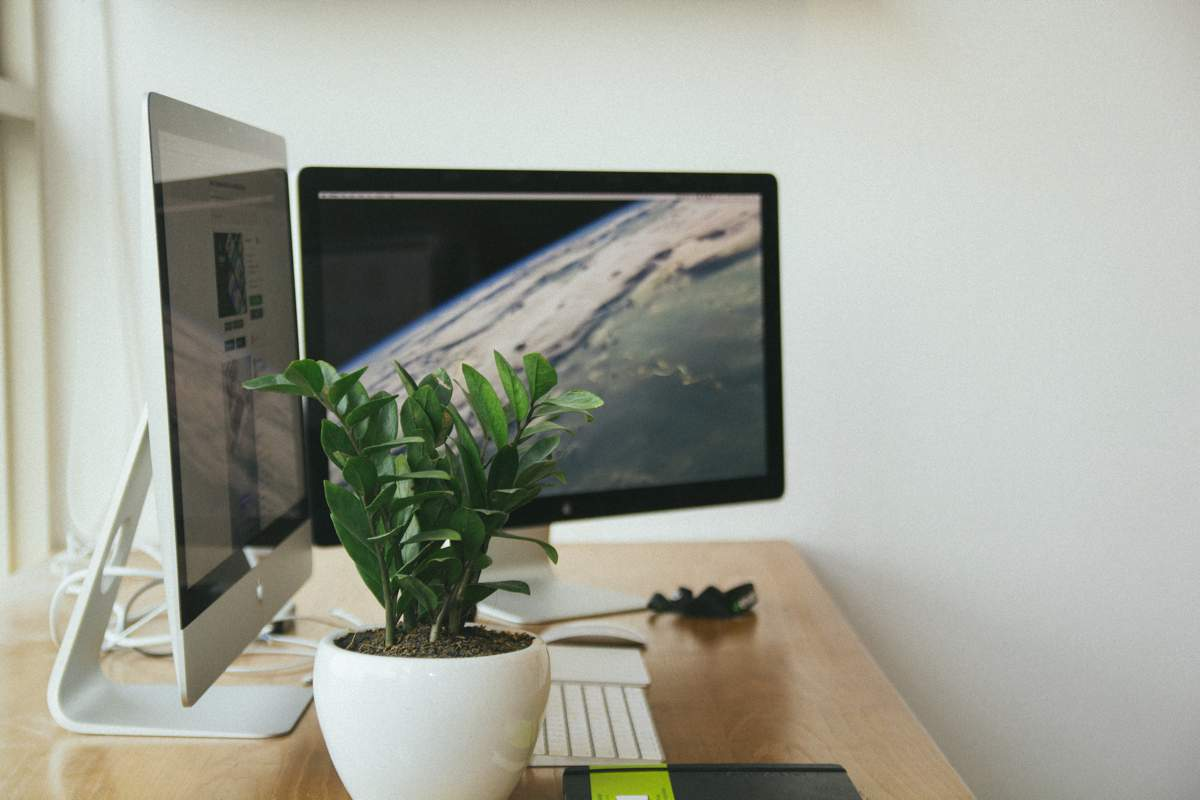 Dual monitors and a plant